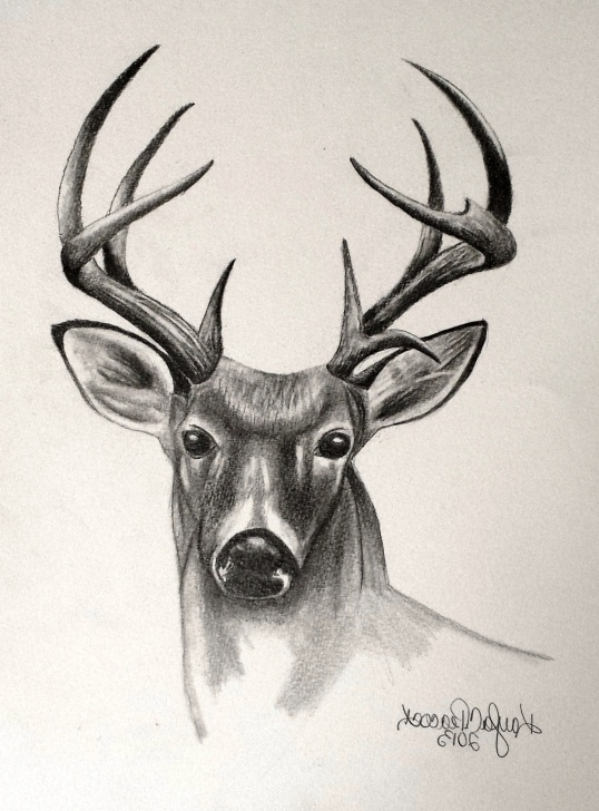 Incredible Deer Pencil Sketch Step by Step Deer Sketch Drawing At Paintingvalley | Explore Collection Of Images