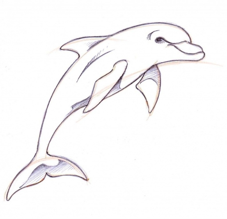 Incredible Dolphin Pencil Drawing Easy Dolphin Drawings In Pencil | How To Draw A Dolphin | Drawing Ideas Images