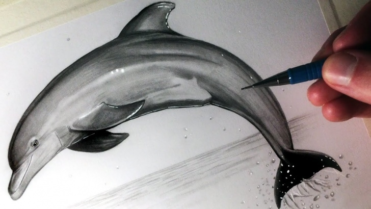 Incredible Dolphin Pencil Drawing Simple How To Draw A Dolphin Photo