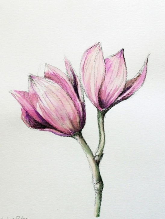 Incredible Flower Colour Pencil Drawing Tutorial Flower Drawing With Color Easy Flower Colour Pencil Drawing At Pictures