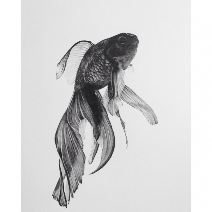 Goldfish Pencil Drawing