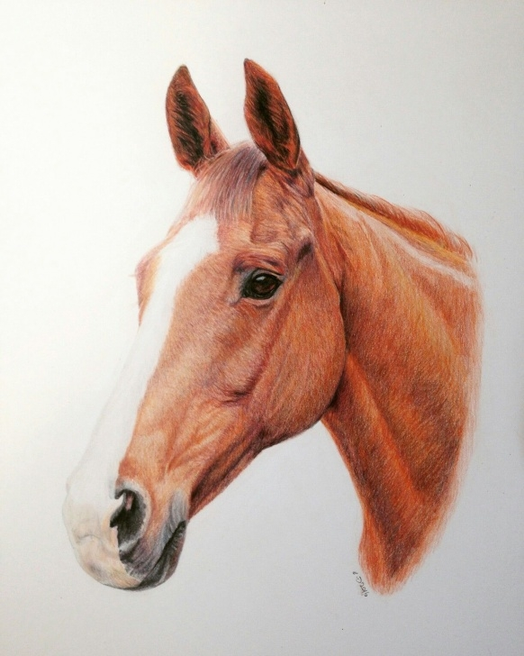 Incredible Horse Drawing Colour Step by Step Horse Portrait, Pet Portraits, Colour Pencil, Drawing, Commission Photos