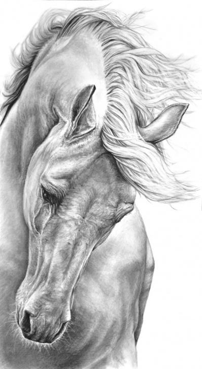 Incredible Horse Pencil Shading for Beginners Pin By Nikólína Jónsdóttir On Teikningar | Horse Drawings, Pencil Images