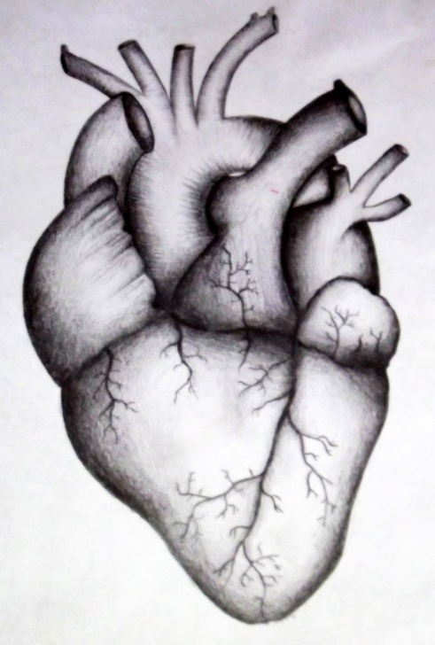 Incredible Human Heart Pencil Drawing Tutorial Human Heart Drawing At Paintingvalley | Explore Collection Of Photo