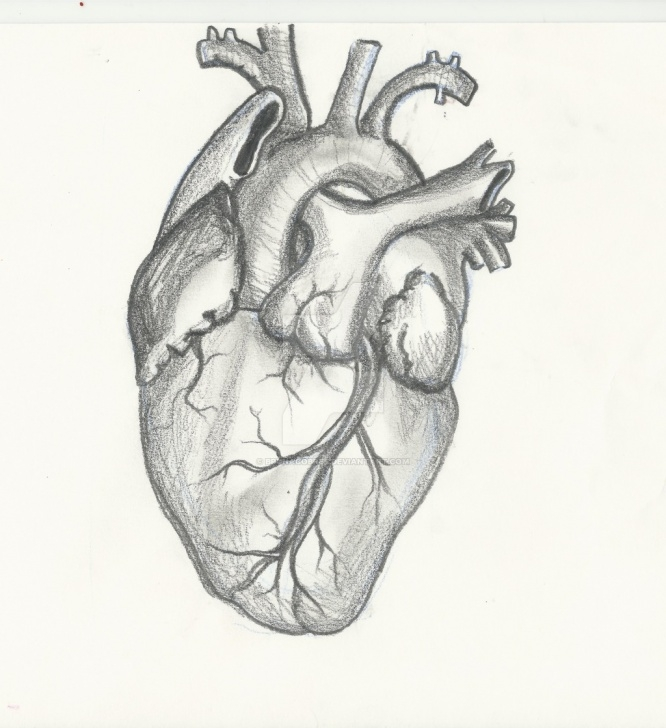 Incredible Human Heart Pencil Sketch for Beginners Heart Sketch Drawing At Paintingvalley | Explore Collection Of Pics