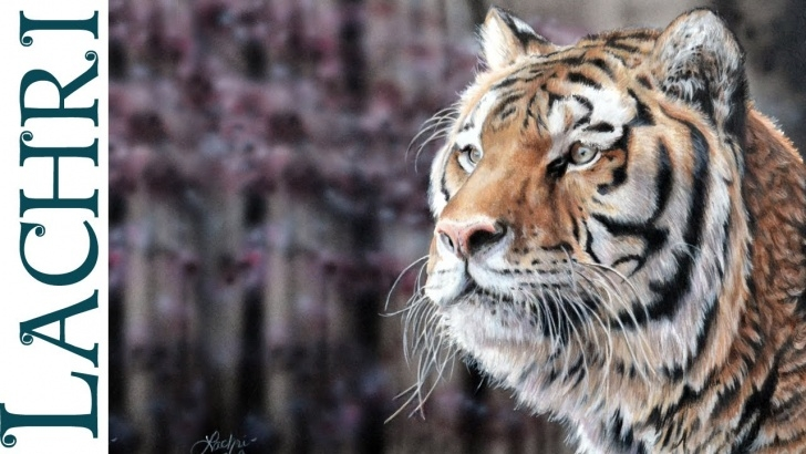 Incredible Lachri Fine Art Colored Pencil Easy Strathmore Colored Pencil Paper Review + Tiger Painting W/ Lachri Images