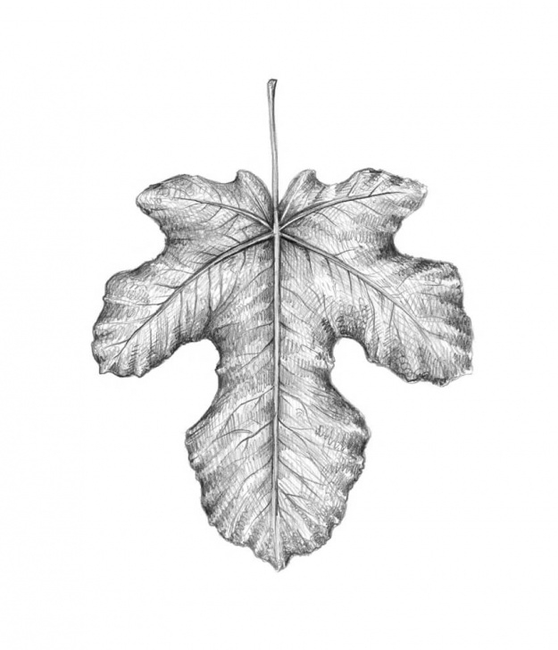 Incredible Leaf Pencil Shading Ideas How To Draw A Leaf Step By Step Photo