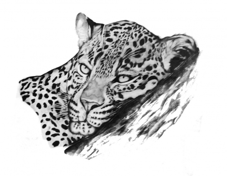Incredible Leopard Pencil Drawing Free Leopard 6B Pencil Drawing | Art | Pencil Drawings, Cat Drawing, Drawings Pictures