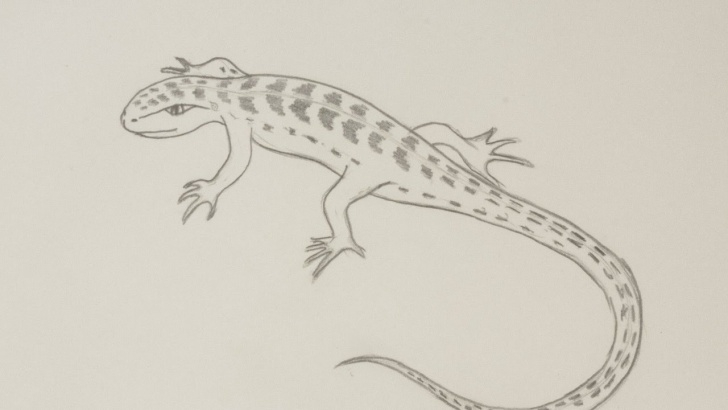 Incredible Lizard Pencil Drawing Free Draw A Lizard By Pencil - Diy Crafts - Guidecentral Image
