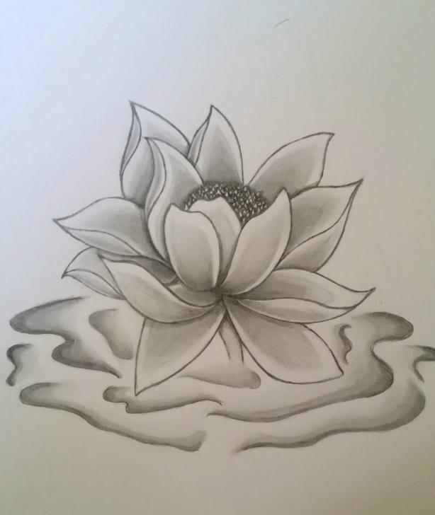 Incredible Lotus Pencil Drawing Tutorials Lotus Flower Pencil Sketch And Lotus Flower Pencil Drawing Lotus Pic