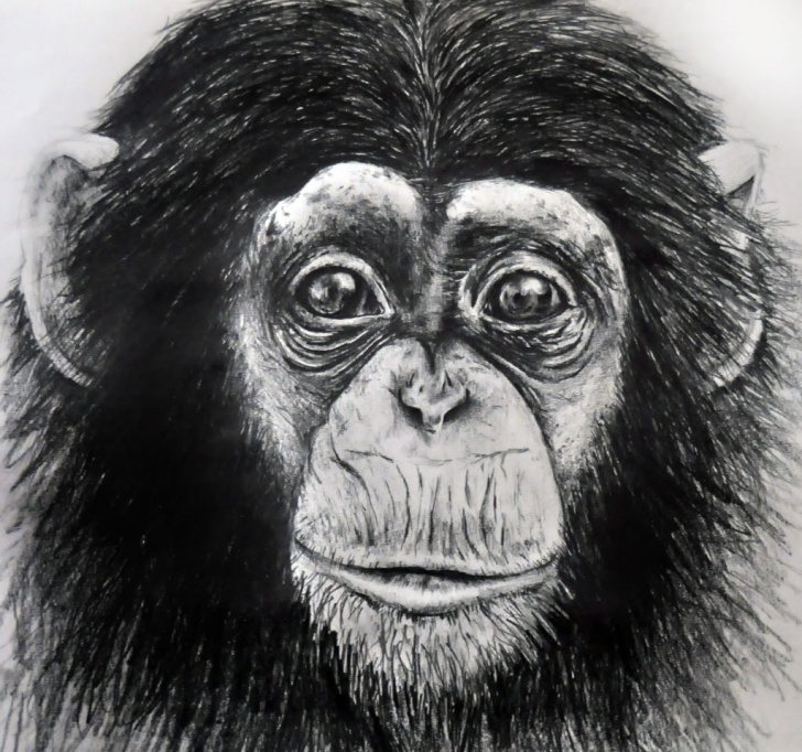 Incredible Monkey Pencil Drawing Lessons Pencil Sketch Of Monkey And Monkey Pencil Drawing Monkey Pencil Pic