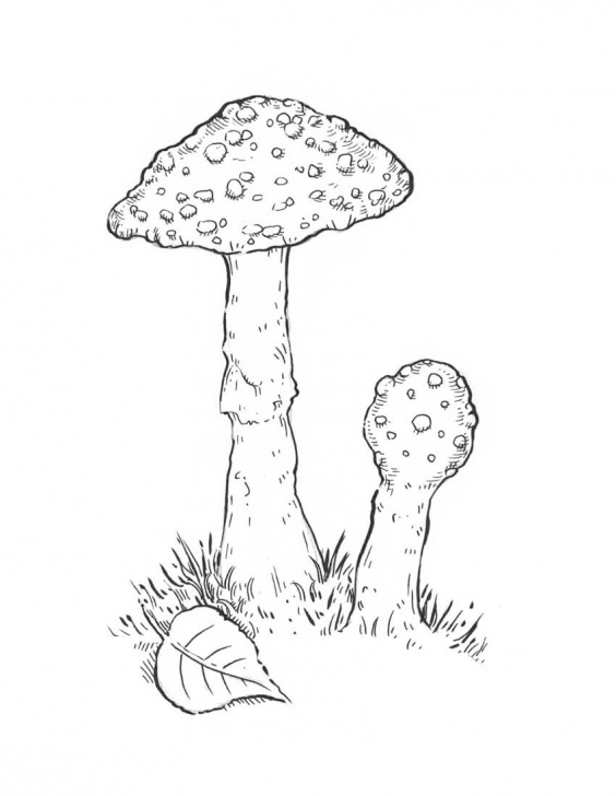 Incredible Mushroom Drawings Pencil Simple How To Draw A Mushroom Images