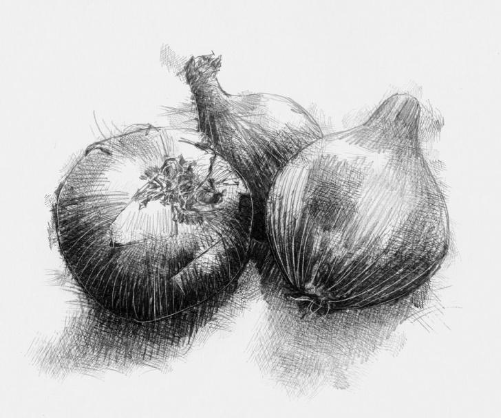 Incredible Onion Pencil Drawing Simple Onions | Pencil Art | Pencil Drawings, Onion Drawing, Drawings Pics