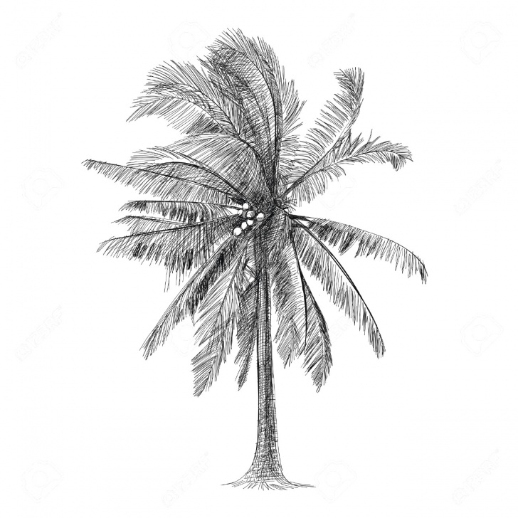 Incredible Palm Tree Pencil Drawing Simple Palm Tree Pencil Drawing At Paintingvalley | Explore Collection Images