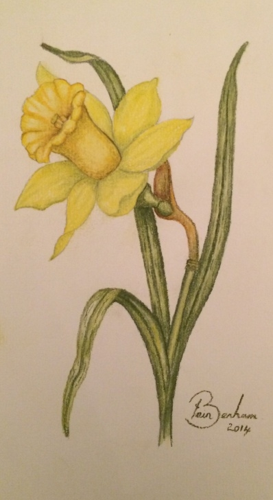Incredible Pastel Pencil Artists Ideas Pastel Pencil Drawing Of A Daffodil Flower…ah Pastel Pencils…. | Art Pics