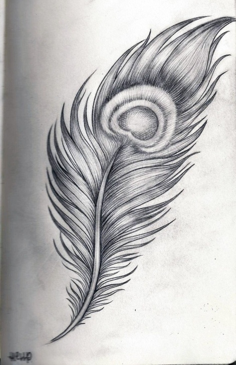 Incredible Peacock Feather Pencil Sketch Free Pin By Alicia Prescott On Tattoos I Want | Feather Drawing, Peacock Pics