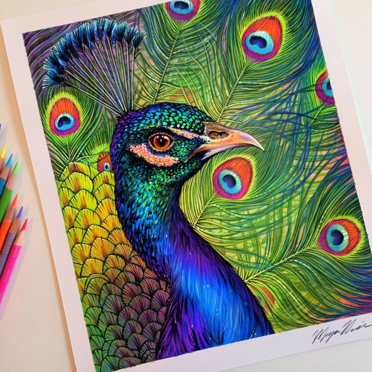 Incredible Peacock Pencil Drawing With Color Courses Colored Pencil Peacock Drawing. | Color Pencil Art In 2019 | Peacock Photo