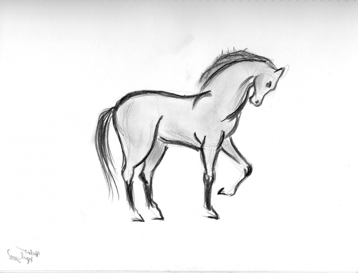 Incredible Pencil Art Animals Courses Pencil Sketches Of Animals At Paintingvalley   Explore Pic