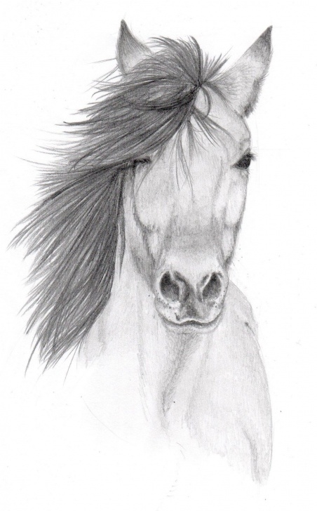 Incredible Pencil Art Animals Free Pencil Sketches Of Animals | Horse Pencil Sketch By Vulpes Corsac Image