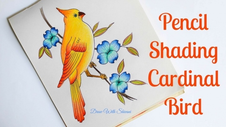 Incredible Pencil Colour Shading Drawing Techniques for Beginners How To Draw Cardinal Bird/ Pencil Color Shading Yellow Bird With Flowers Photos