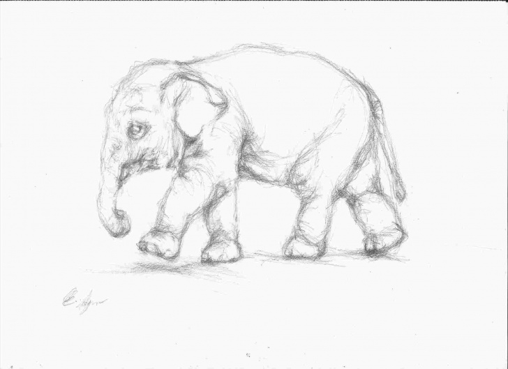 Incredible Pencil Drawings Of Animals Easy Courses Pencil Sketching Of Animals Pictures