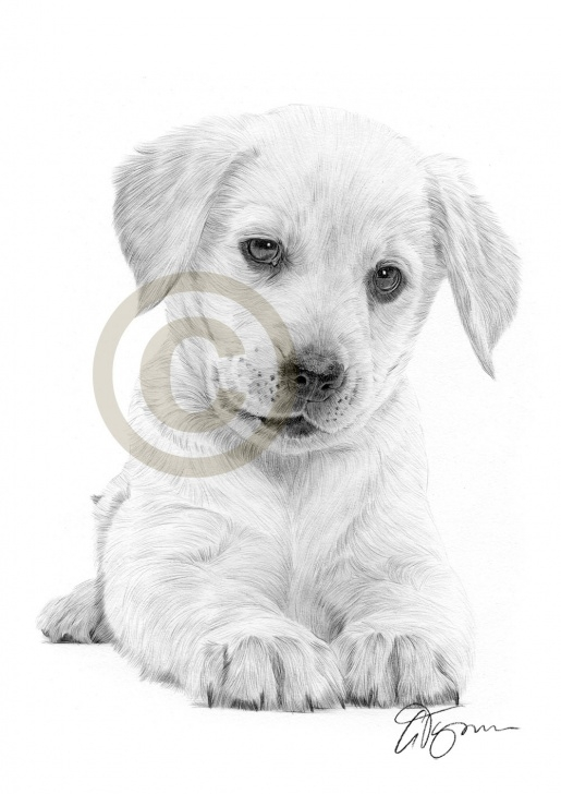 Incredible Pencil Drawings Of Puppies Techniques for Beginners 10+ Pencil Drawings Of Puppies - Pencil Drawing - Drawing Sketch Pictures