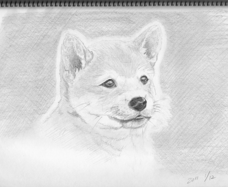 Incredible Pencil Drawings Of Puppies Techniques Shiba Dog Puppy Pencil Sketch By Theblindalley On Deviantart Photo