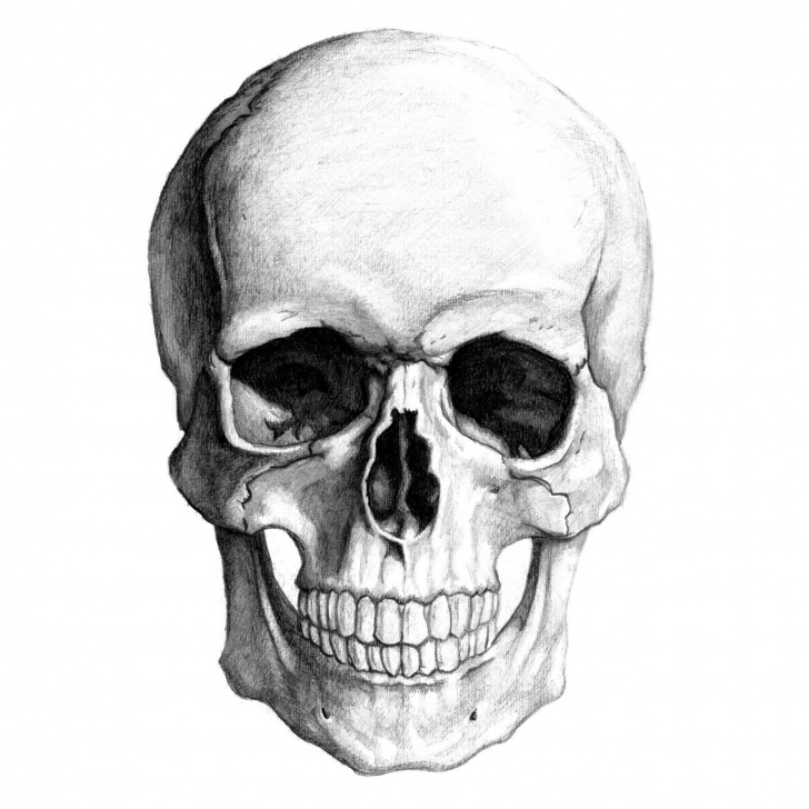 Incredible Pencil Drawings Skulls Lessons Kernie Cam Productions: Gallery: Skull Pencil Drawing Pictures