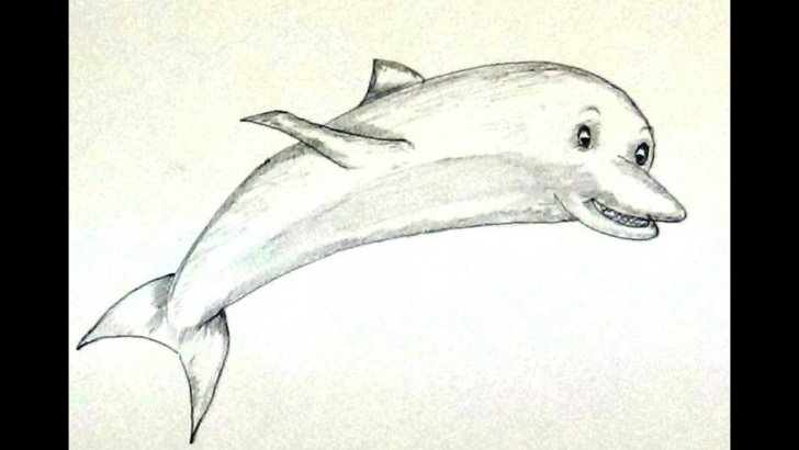 Incredible Pencil Work Drawing Free How To Draw Dolphin / Dolphin Drawing Pencil Work Step By Step Pic