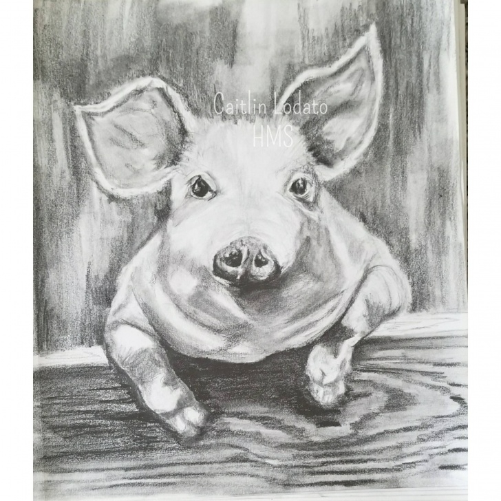 Incredible Pig Pencil Drawing Ideas Piggy In Pencil, Pencil Drawing Of A Pig, Cute Pig Drawing, Barnyard Pig,  Barnyard Animals, Pig, Farm Animals Photo