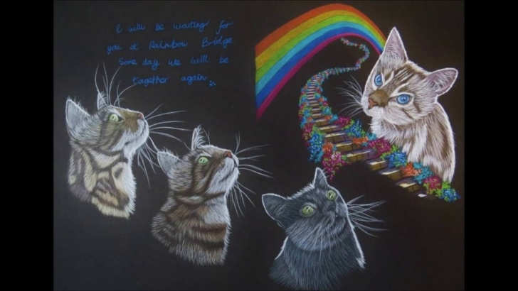Incredible Prismacolor On Black Paper Step by Step Cat Colour Pencil Drawings On Black Paper With Prismacolor Pencils Pics