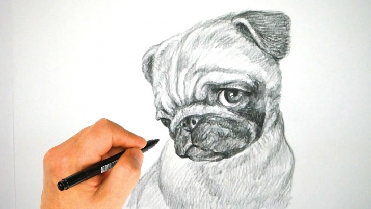 Incredible Pug Pencil Drawing Courses How To Draw A Pug Dog Face | Pencil Drawing Tutorial | Drawpedia 드로우피디아 Pic