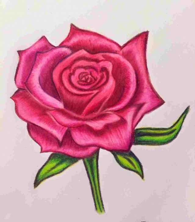 Incredible Rose Color Pencil Drawing Ideas Rose Drawing In Color At Paintingvalley | Explore Collection Of Photo