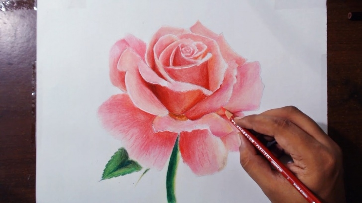 Incredible Rose Drawing Colour Tutorials Rose Drawing Color At Paintingvalley | Explore Collection Of Photos