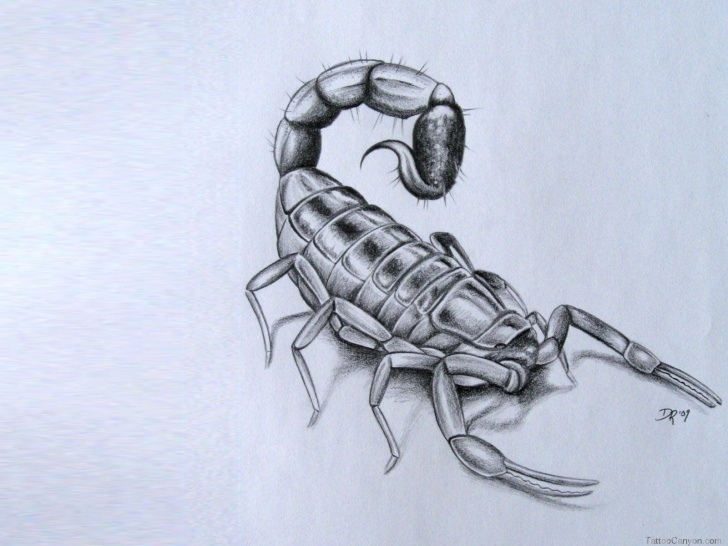Incredible Scorpion Pencil Drawing Free Scorpion Pencil Sketch And D-Scorpion-Tattoo-Designs- | Art Drawings Images