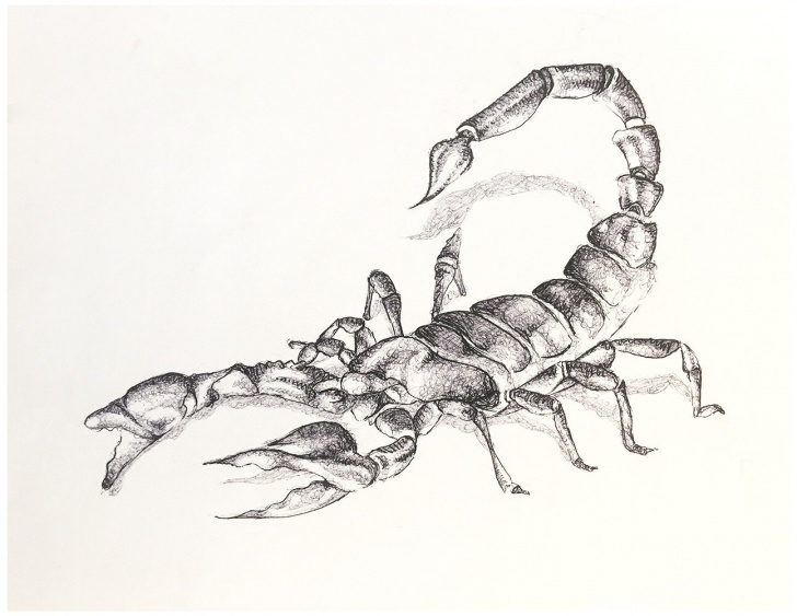 Incredible Scorpion Pencil Drawing Lessons Scorpion Pencil Sketch At Paintingvalley | Explore Collection Of Pictures