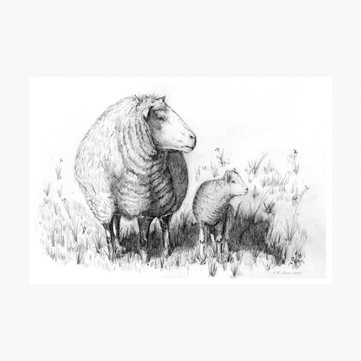 Incredible Sheep Pencil Drawing Courses Mother Sheep & Lamb Pencil Drawing Sketch | Photographic Print Pics