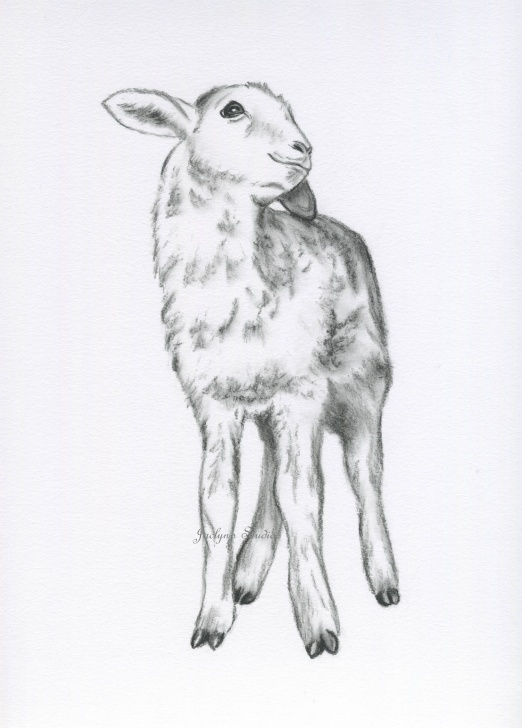 Incredible Sheep Pencil Drawing Courses Sketch Drawing Of A Sheep And Lamb Drawing, Pencil, Sketch, Colorful Pictures