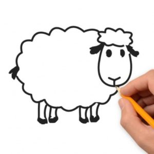 Incredible Sheep Pencil Drawing Techniques for Beginners Sheep Animals Pencil To Draw Step By Step Photos