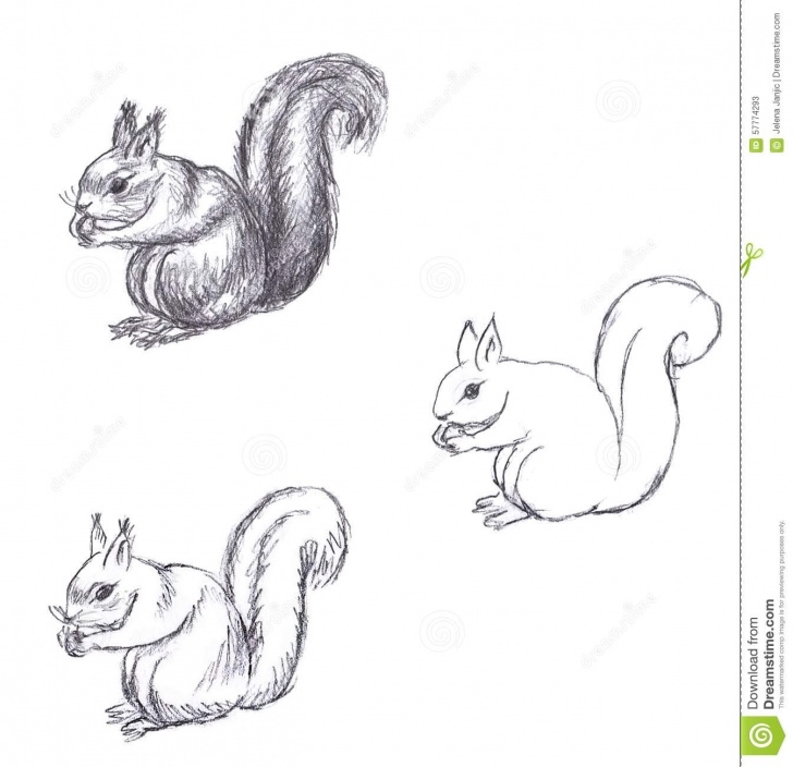 Incredible Squirrel Pencil Sketch Techniques Pencil Drawing Of Squirrel On White Background Stock Illustration Picture