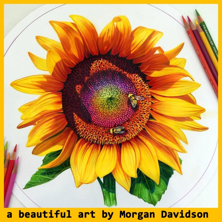 Incredible Sunflower Colored Pencil Courses Sunflowers Drawing Color And Sunflower Drawing Color Sunflower Image