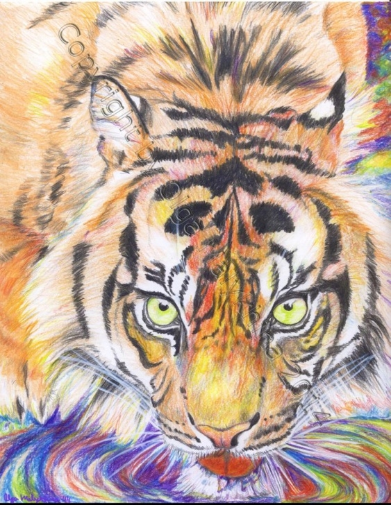 Incredible Tiger Colored Pencil Drawing Courses Psychedelic Tiger In Colored Pencils Drawing Picture