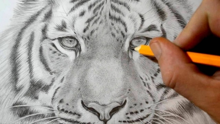 Incredible Tiger Pencil Drawing Lessons Easy Pencil Sketch Of Tiger And How To Draw A Tiger - Realistic Photos