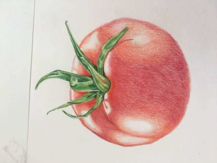 Incredible Tomato Pencil Drawing for Beginners Jumpstart Level 1: Ripe Tomato In Colored Pencil Pic