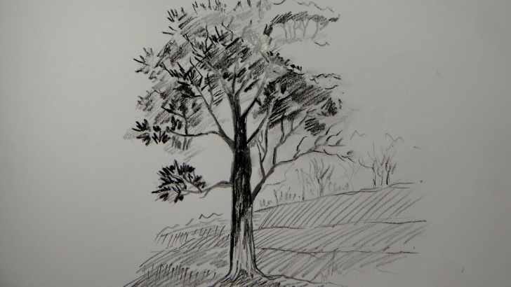 Incredible Tree Pencil Shading Ideas Pencil Tree Sketches At Paintingvalley | Explore Collection Of Photos