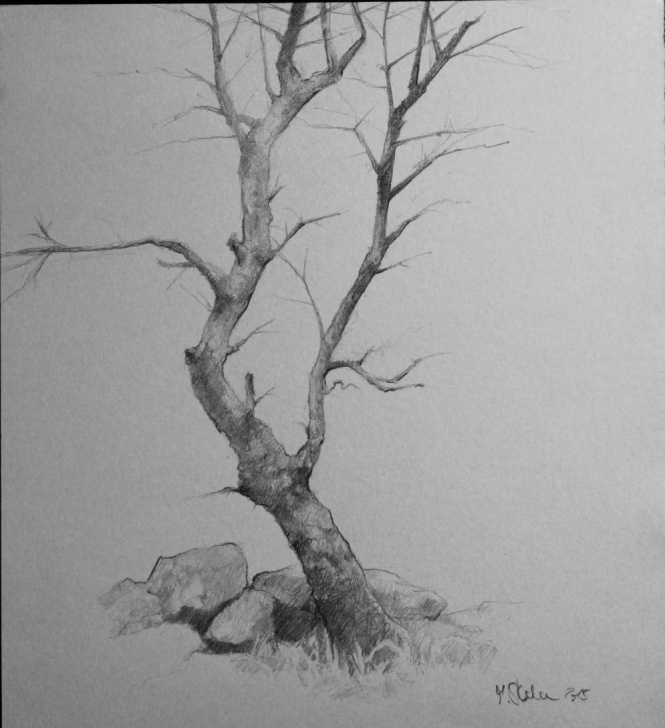 Incredible Tree Pencil Shading Techniques Pin By Patricia Martin On Drawing In 2019 | Pencil Drawings Images
