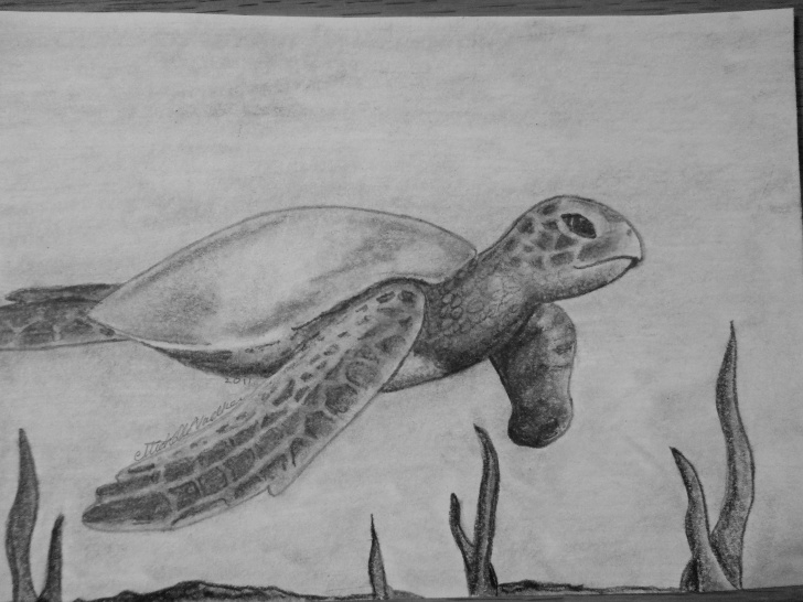 Turtle Pencil Drawing