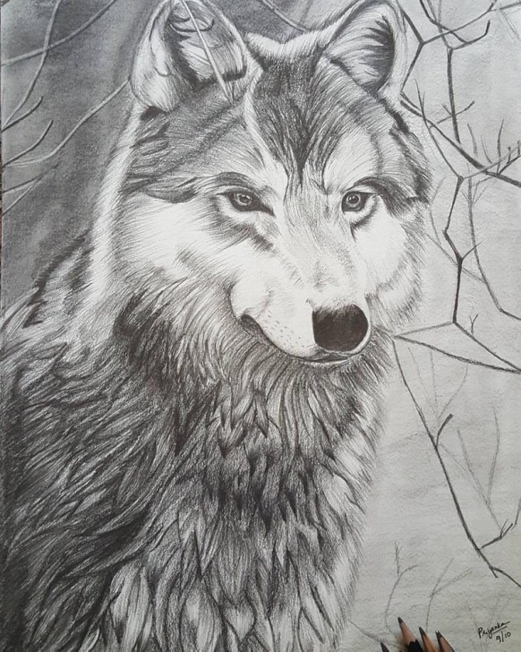 Incredible Wolf Pencil Art Ideas The Lone Wolf, Pencil Sketch, Pencil Art,wolf Pencil Art, Wolf Wall Decor,  Wolf Wall Hanging, Animal Art, Animal Gift Ideas, Wolf Frame,wolf Image