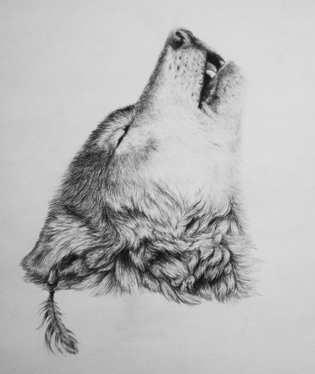 Incredible Wolf Pencil Art Step by Step Wolf Pencil Sketch At Paintingvalley | Explore Collection Of Image