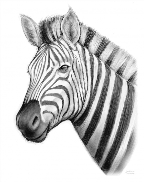 Incredible Zebra Pencil Drawing Simple Rhpinterestcom-U-Zebra-Pencil-Drawings-Back-Bird-In-Pinterest-S-Art Image
